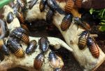What Diseases Do Roaches Carry