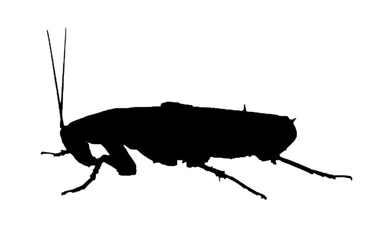 What Does A Roach Look Like