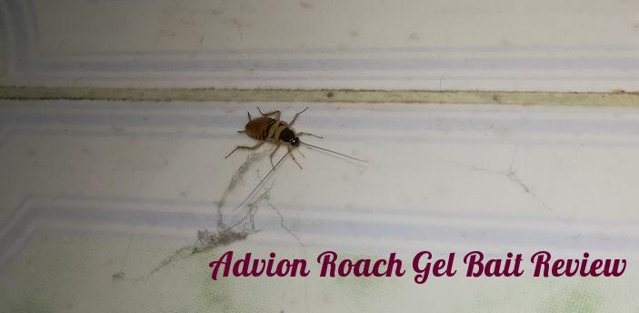 Dupont Advion Cockroach Gel Bait Review | Best Roach Killer for ...
