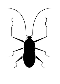 cockroach type